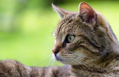 cats health