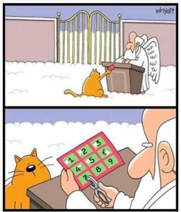 feline immunodeficiency