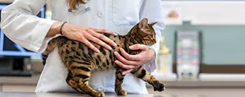 Do Veterinarians Support A Naturally Healthy Cat?