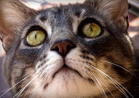 holistic feline asthma treatment