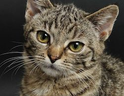 preventing or eliminating fleas and worms in cats naturally