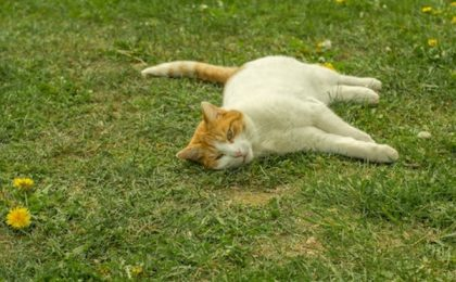 Cats Have Natural Recuperative Abilities