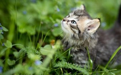 are herbs for cats safe