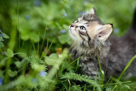 Are Herbs For Cats Safe?
