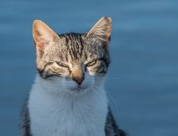finding raw cat food in a pandemic