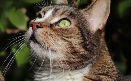 viruses in cats