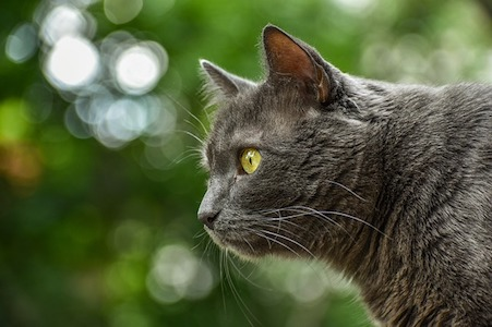 Self Fasting In Cats – It's Natural