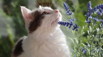 consulting a homeopath for your cat