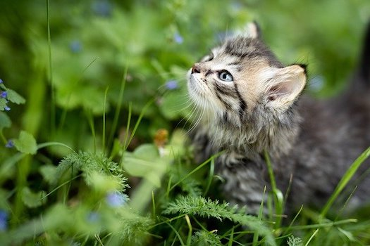 When Your Cat Won't Eat – Reasons and Holistic Solutions