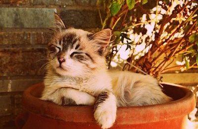 gum disease in cats