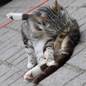 Difficult Urination In Cats With Holistic Solutions
