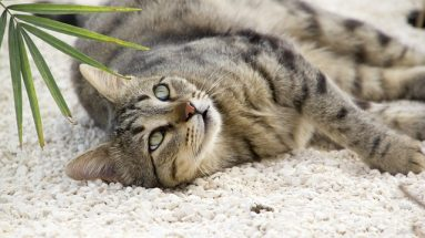 healing cancer in cats