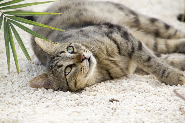 Healing Cancer In Cats The Holistic Way