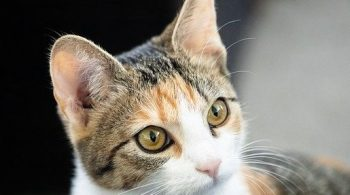 holistic health care for cats