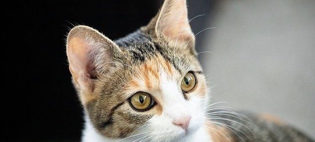 Holistic Health For Cats